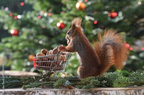 Fotobehang Eekhoorn Eichhörnchen Schorschi mit Einkaufswagen