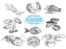 Vector Hand Drawn Illustration With Seafood.