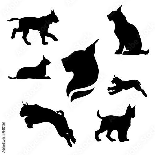 Photo Lynx set vector