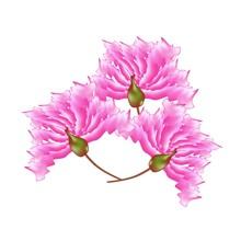 Pink Crape Myrtle Flowers On W...