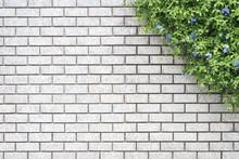 Decorative Green Garden On A Brick Wall