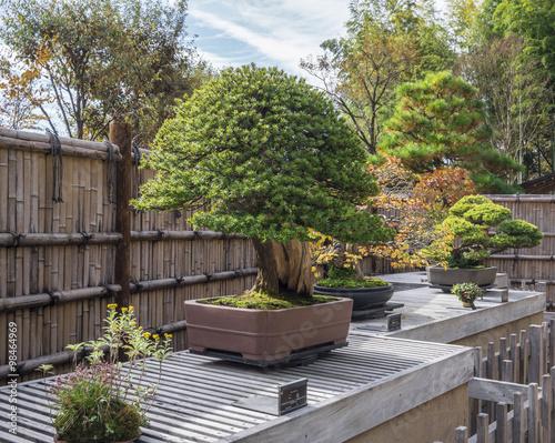 Fotobehang Tuin bonsai trees - selective focus on middle bonsai
