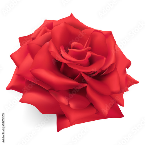 Red Rose.