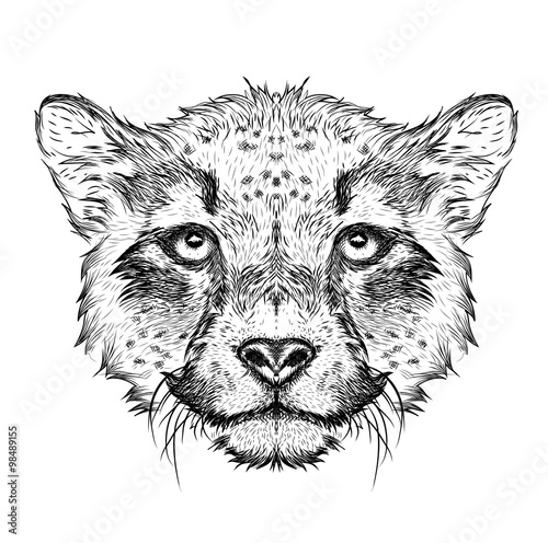 Deurstickers Hand getrokken schets van dieren Hand draw cheetah portrait. Hand draw vector illustration