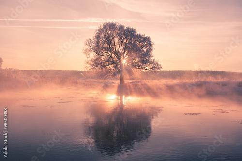 фотография  Bright winter sun shines through frosty tree