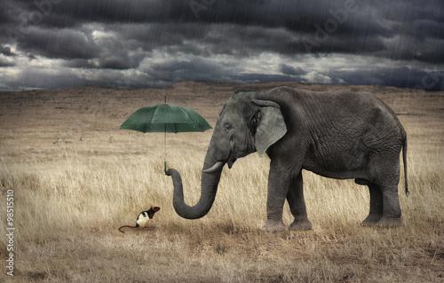 Foto op Plexiglas Olifant Elefante che protegge un topolino