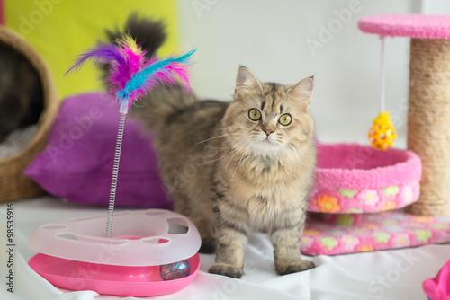 Foto op Aluminium Kat Cute tabby cat with many toys