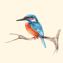 Kingfisher On Branch. Vector I...