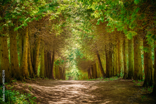Papiers peints Route dans la forêt Walkway Lane Path With Green Trees in Forest. Pathway Way Throug
