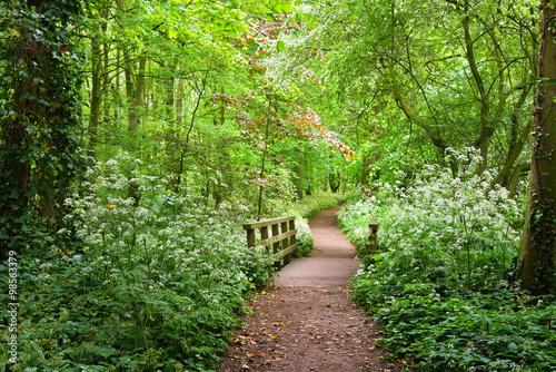 lesne-przejscie-w-stochemhoeve-las-w-holandii