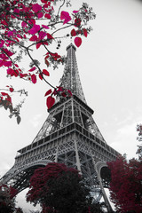 Fototapetainfrared photography Eiffel Tower