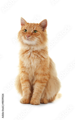 Fotografie, Tablou Fluffy red cat isolated on white background