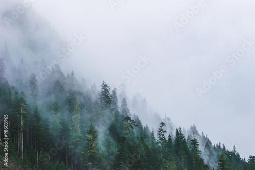 lasy-skandynawskie-pokrywajace-sie-mgla