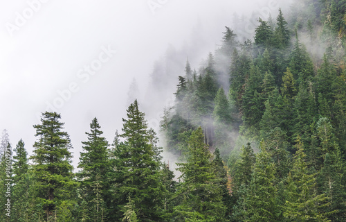 mountain forests covering by fog.