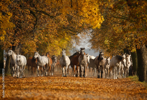 Arabian horses on the village road in misty light