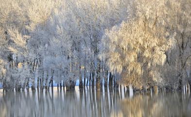 Panel Szklany Zima Frosty winter trees