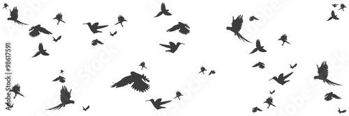 Fotografie, Obraz  Silhouetten von Vögeln im Panorama