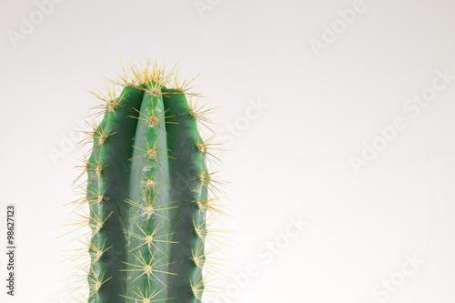 Papiers peints Cactus Small cactus in metal can