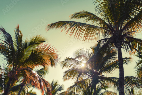 Canvas Prints Palm tree Coconut palm trees and sun. Vintage stylized