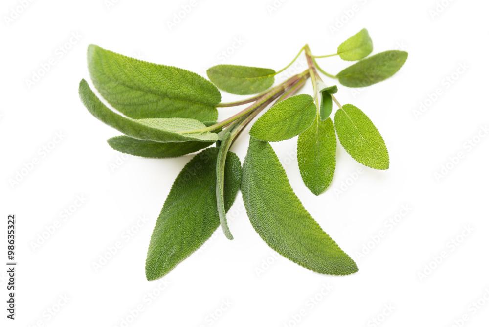 Fototapety, obrazy: Salvia fresca su fondo bianco