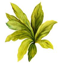 수채화 손맛이 부드러운 잎새 묘사기법