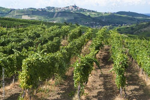 Spoed Foto op Canvas Blauwe hemel Vineyards in Oltrepo Pavese (Italy)