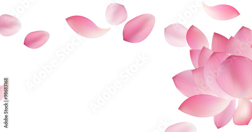 Photographie  White background with pink peta l of lotus