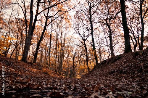 Il bosco in autunno © poggiusphoto