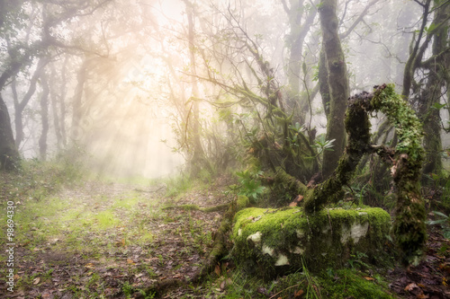 Foggy forest with sun rays in Tarifa, Cadiz, Spain. Morning Sun