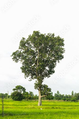 Foto auf Gartenposter Landschappen big tree on field