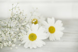 Daisy flower on wooden background