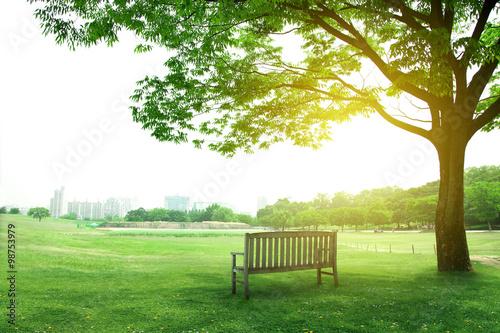 Fotobehang Tuin 나무와 벤치