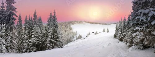 Poster Gris Ukrainian Carpathians snowy forest
