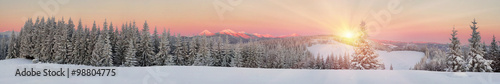 Spoed Foto op Canvas Zalm Ukrainian Carpathians snowy forest