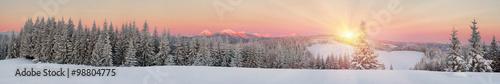 Canvas Prints Salmon Ukrainian Carpathians snowy forest