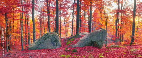 Beeches the rocks