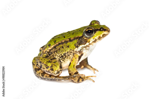 Small sitting green frog seen from the side on white background
