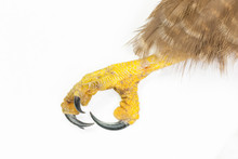 Detail Of The Claw And Talons ...