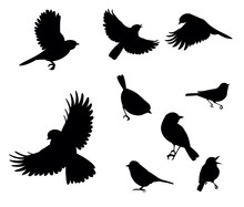 Silhouettes Of Birds Flying An...