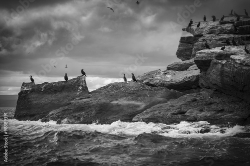 Canvas-taulu Cormorants roost on Bird Island off the coast of Cape Breton, Canada