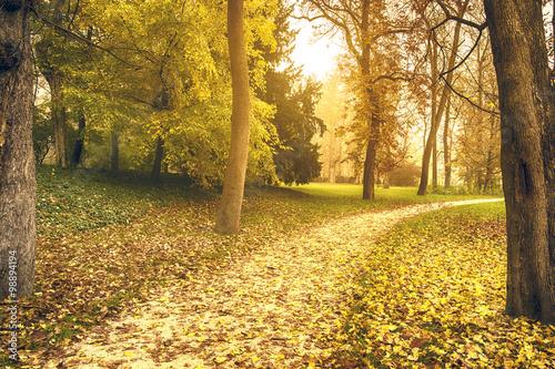 Poster Herfst Autumn scene