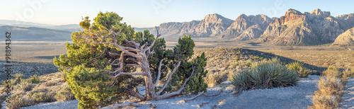 Fotografie, Obraz  Red Rock Canyon