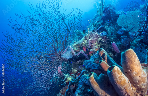 Aluminium Prints Under water Underwater coral reef