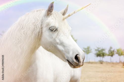 Tela Unicorn