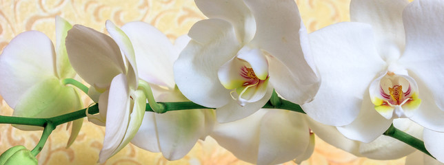 Fototapeta Storczyki Flowers white orchid