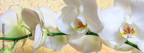 Flowers white orchid