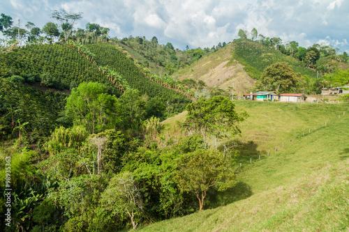 In de dag Lime groen Coffee plantation near Salento, Colombia