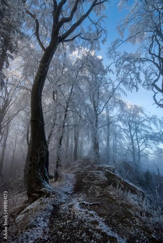 Oszronione drzewa na Jaworzynie Krynickiej - fototapety na wymiar