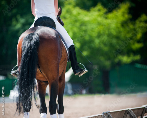 Photo  back view of rider on a horse