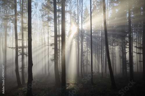 Keuken foto achterwand Bossen Sun rays through the foggy forrest